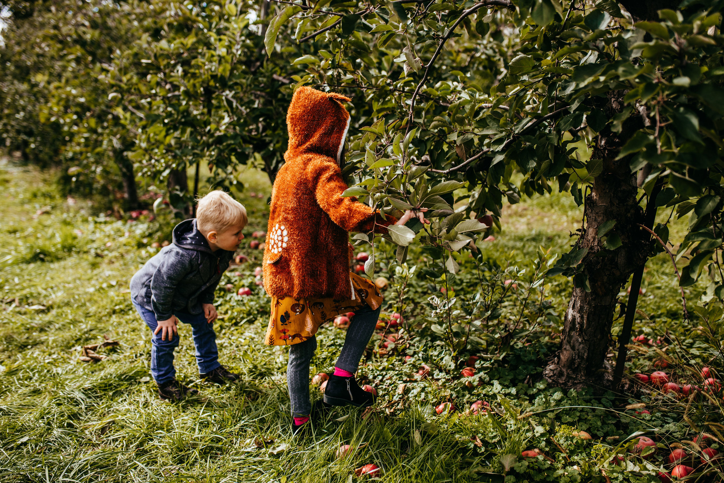 Apple Picking - Personal Documentary Session