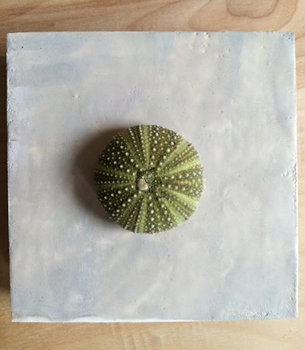 sea urchin on encaustic coated support