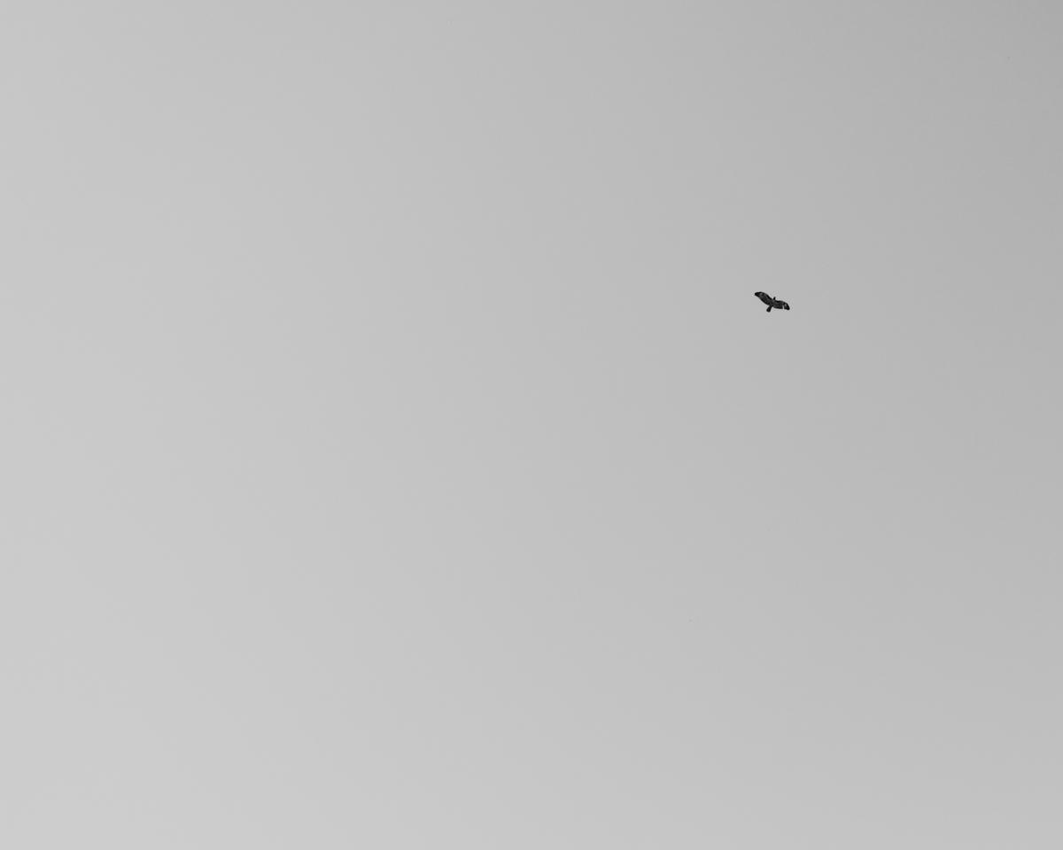 L1020368.jpg