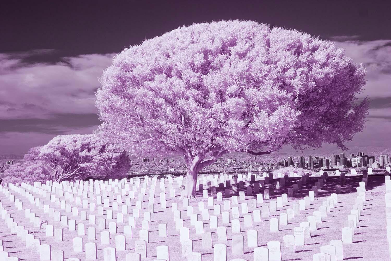 Cemetery 30