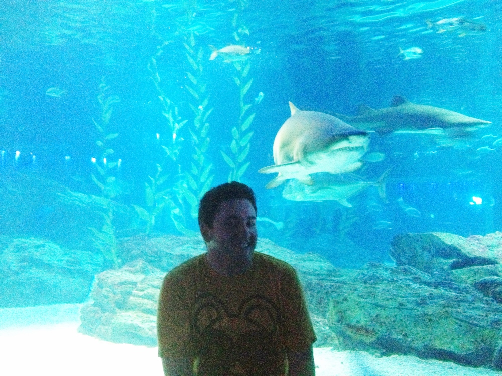 Me and my shark friend