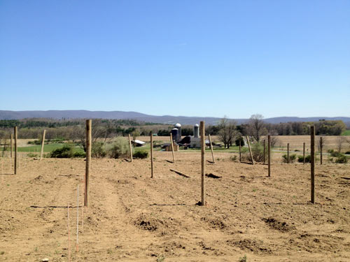 Building the Original Sin Orchard