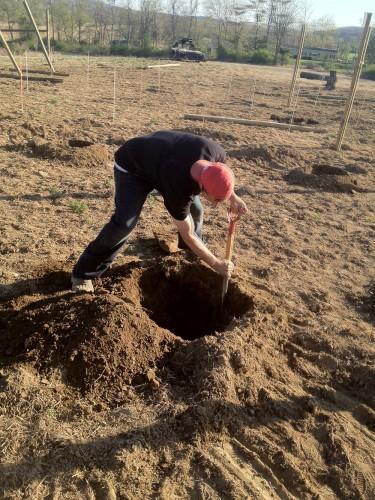Hard at work, digging in the Original Sin Hard Cider Orchard