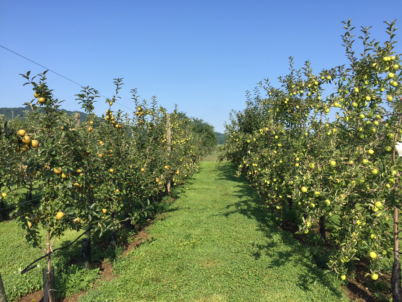orchard pic 8:16.JPG