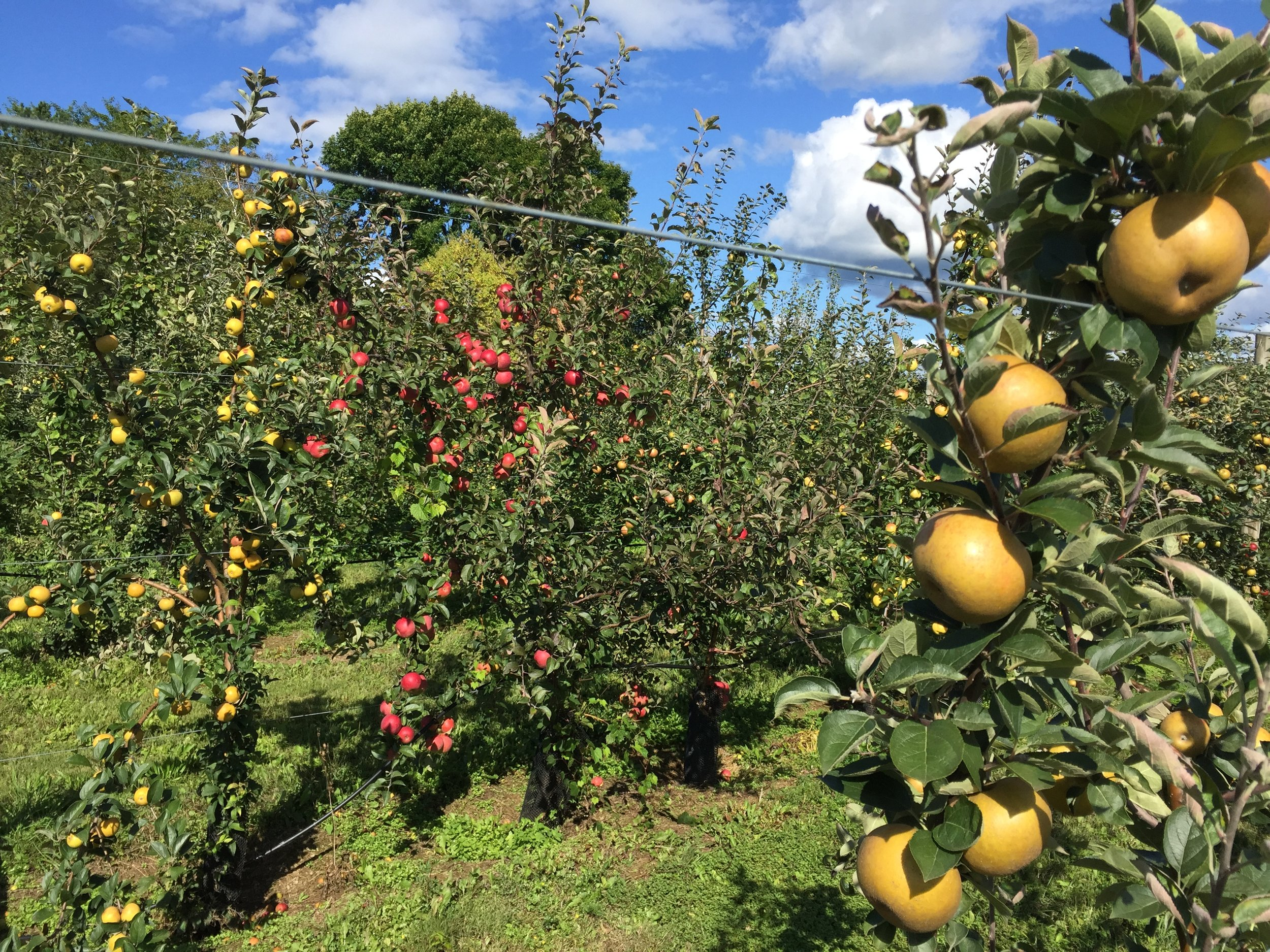 Hudson Valley Apple Project - September