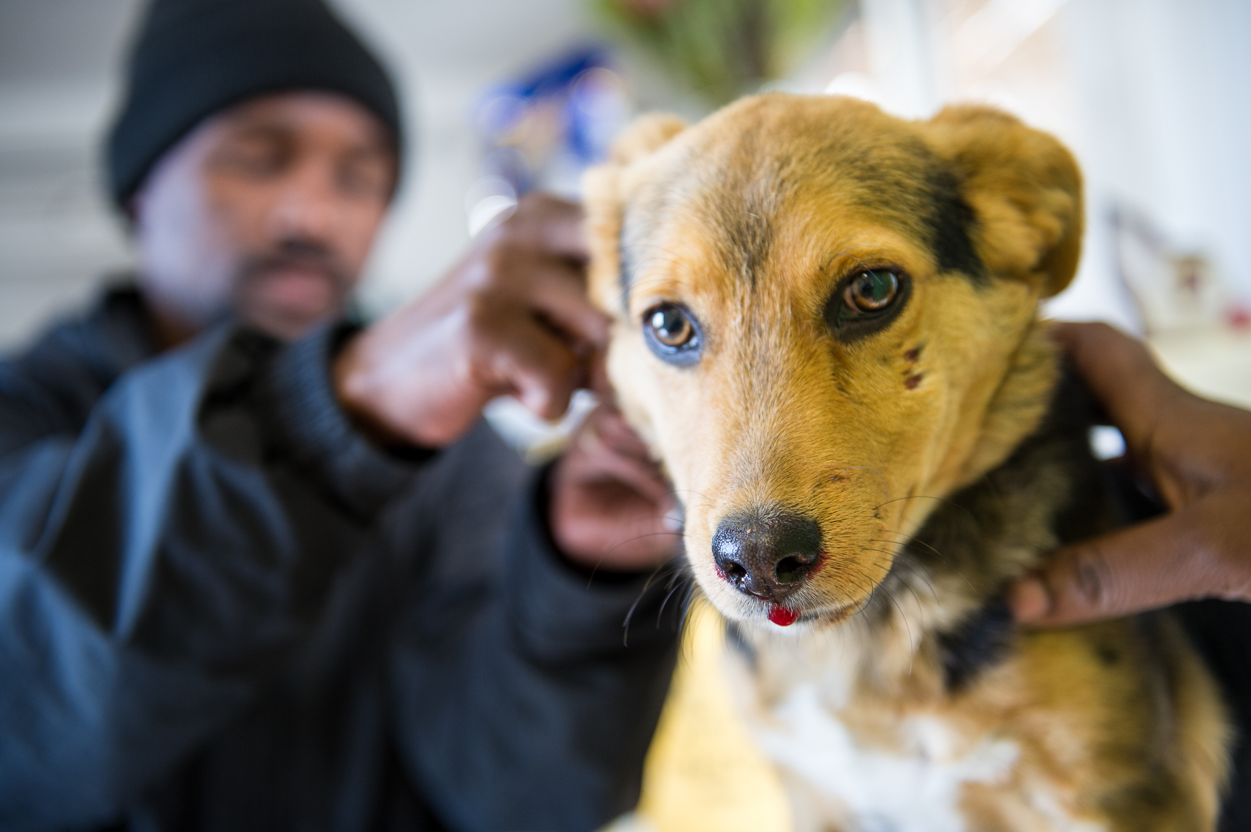 Promise Tshayisa, one of the clinic's animal care workers, begins treatment on a puppy that was rushed to Mdzananda after being hit by a car. Motor vehicle accidents are the single largest source of injury and death to pets in Khayelitsha.