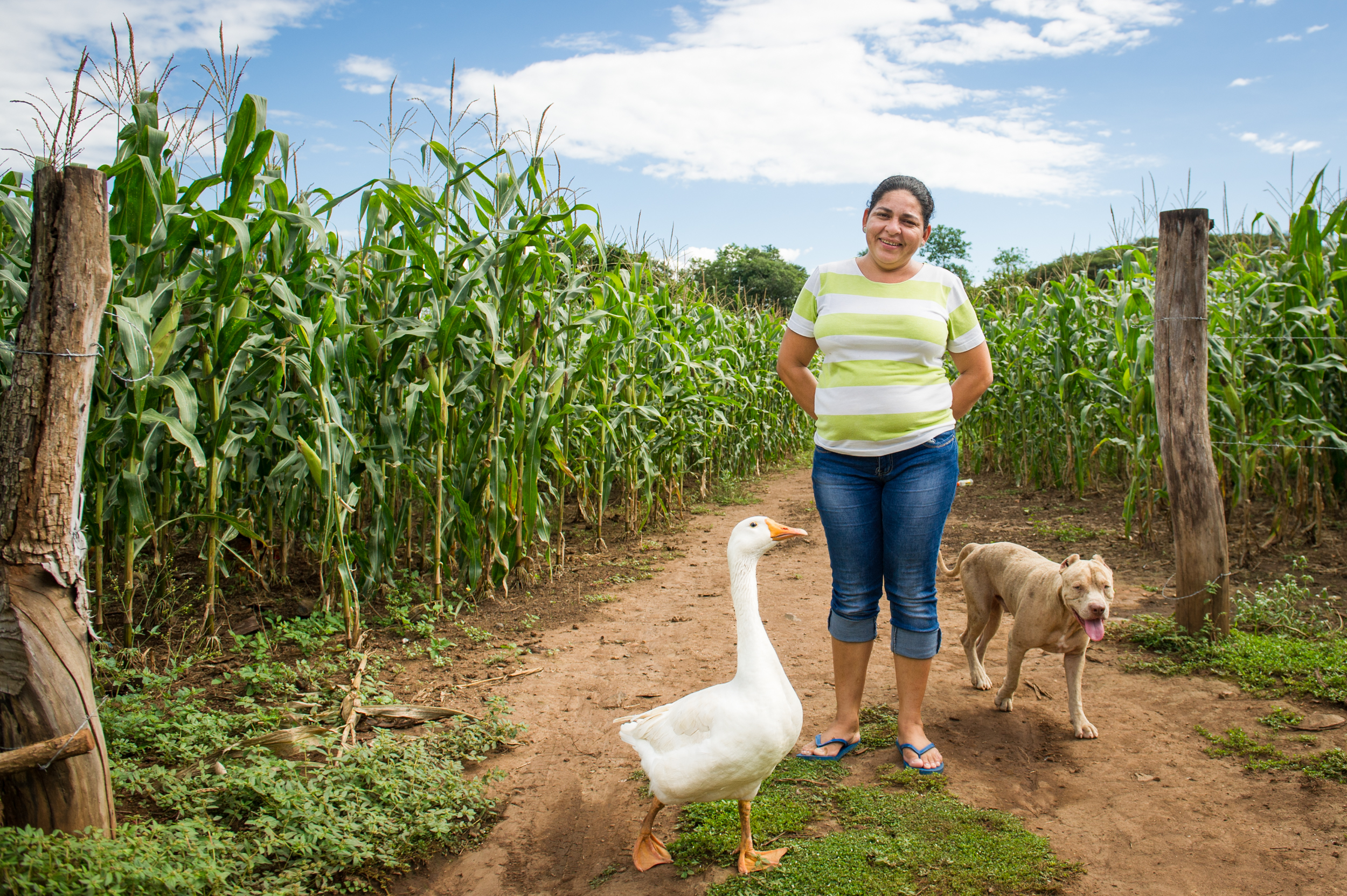 Blanquita the goose & Lorenzo the pit bull are best friends who work security on Yohana's vegetable farm.