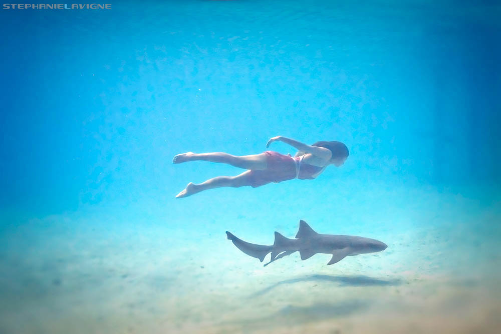 StephLaVigne-Girl-Swimming-With-Shark-Compass-Cay-UW7644w.jpg