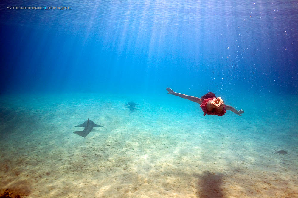 StephLaVigne-Girl-Swimming-With-Sharks-Compass-Cay-Dream-7590w.jpg