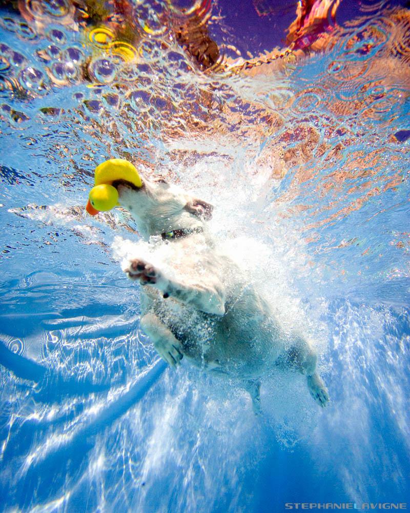 StephLaVigne-Underwater-Dog-Jack-Russel-8216w.jpg