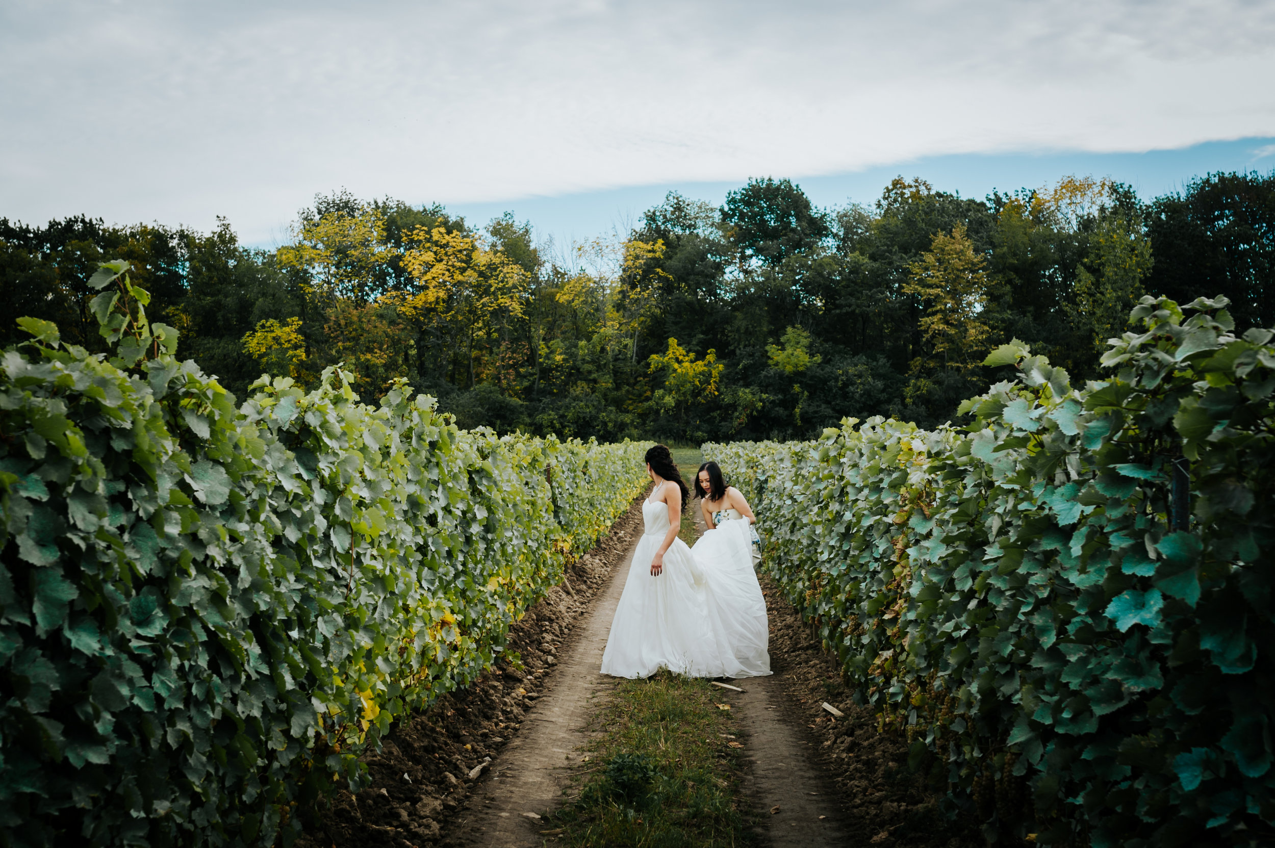 wedding photographer, vineyard, Niagara-On-The_lake, love, Burlington wedding photographer,maid of honour