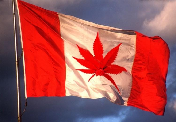 Marijuana-Canada-750x521.jpg