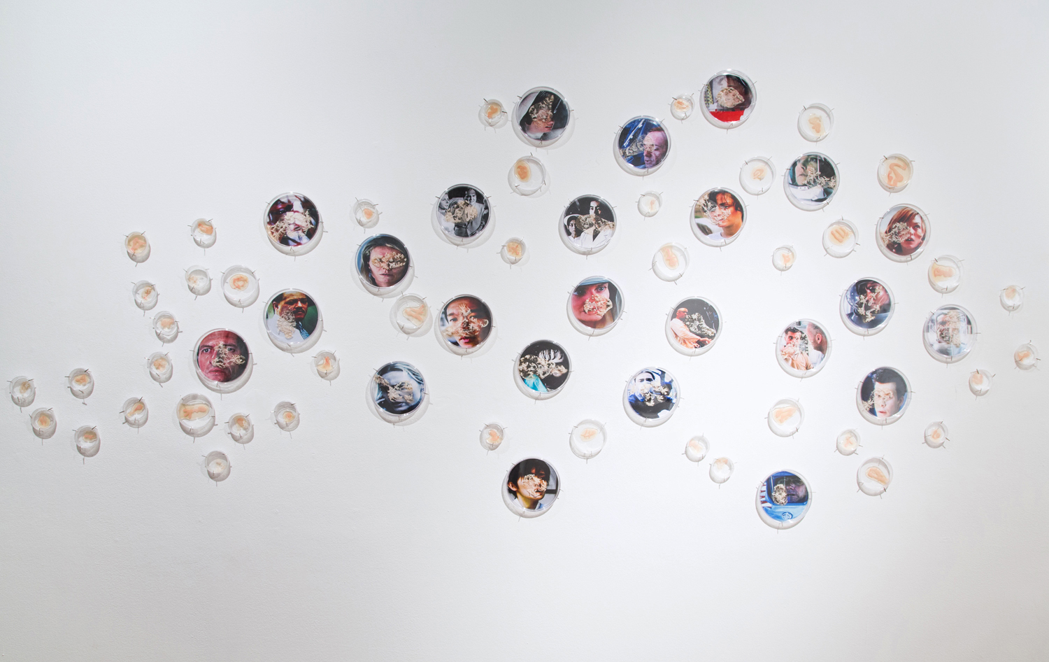 """I Caught it at The Movies  (detail, left side),2013 320"""" x 48"""" x 2"""" Petri dishes, digital images, mylar, gouache, agar, Halobacterium sp. NRC-1"""