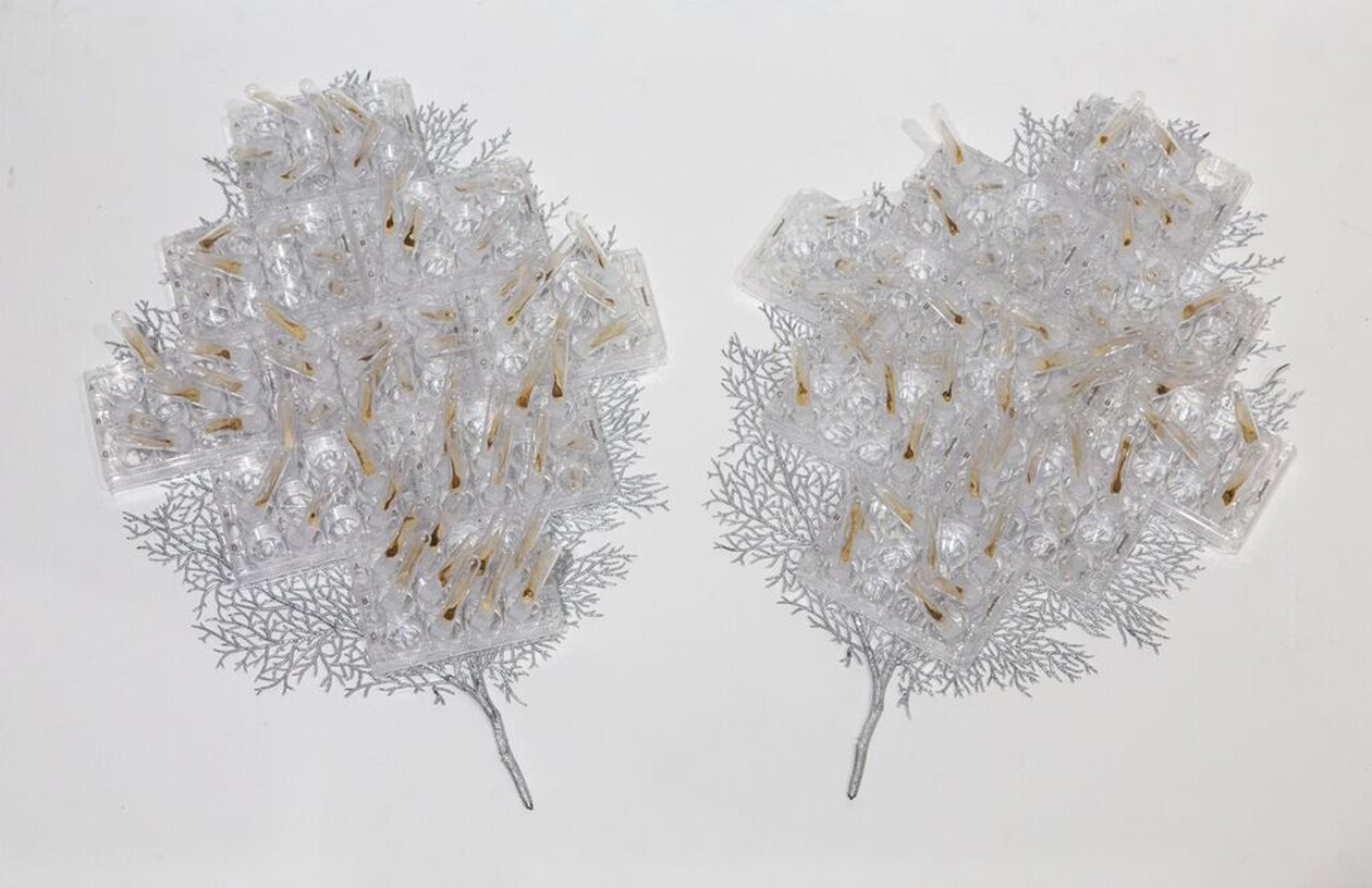 """Quiescent Growth ,2018 Partially decellularized maple keys, test tubes, cell culture plates, synthetic leaves 36""""x22""""x6"""""""