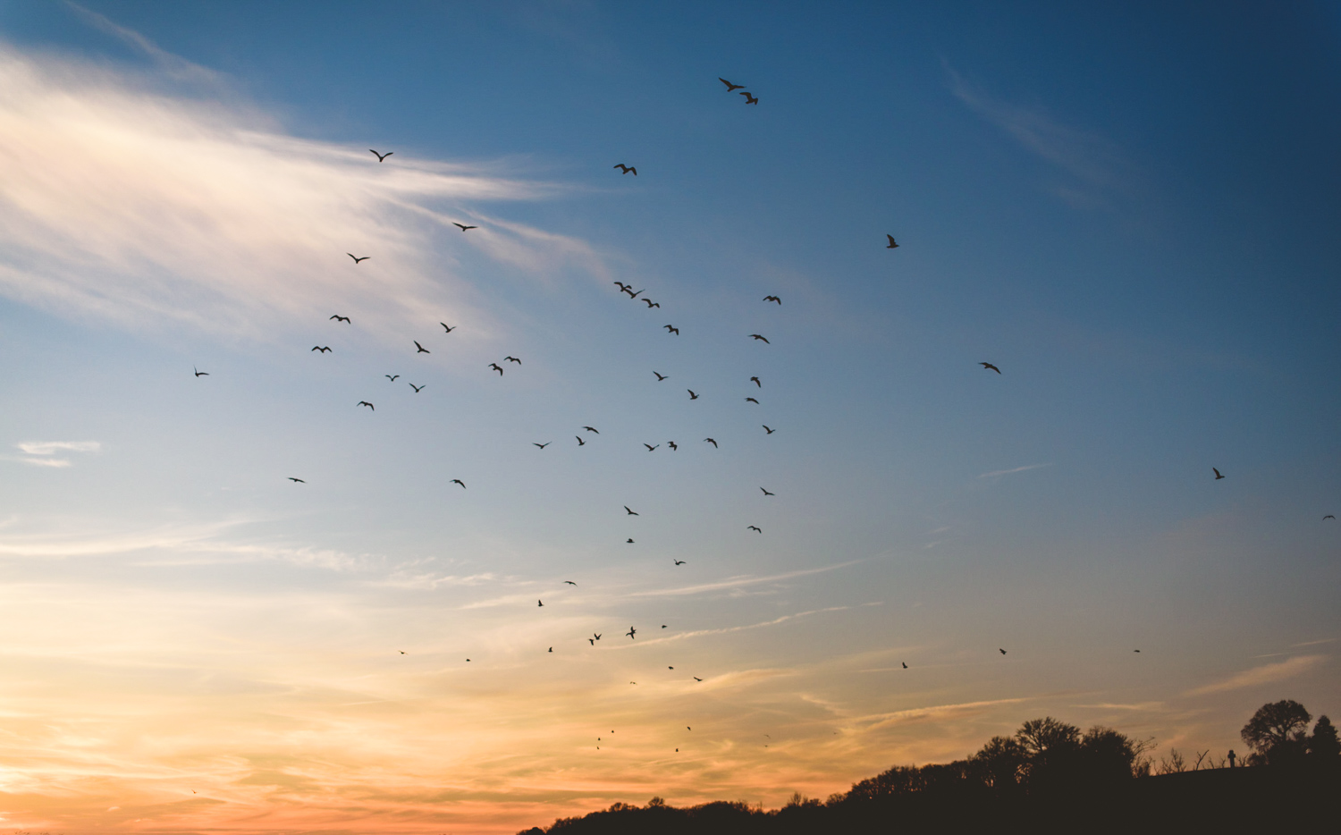 010 - birds flying above the james river in richmond wedding photographer nathan mitchell.jpg