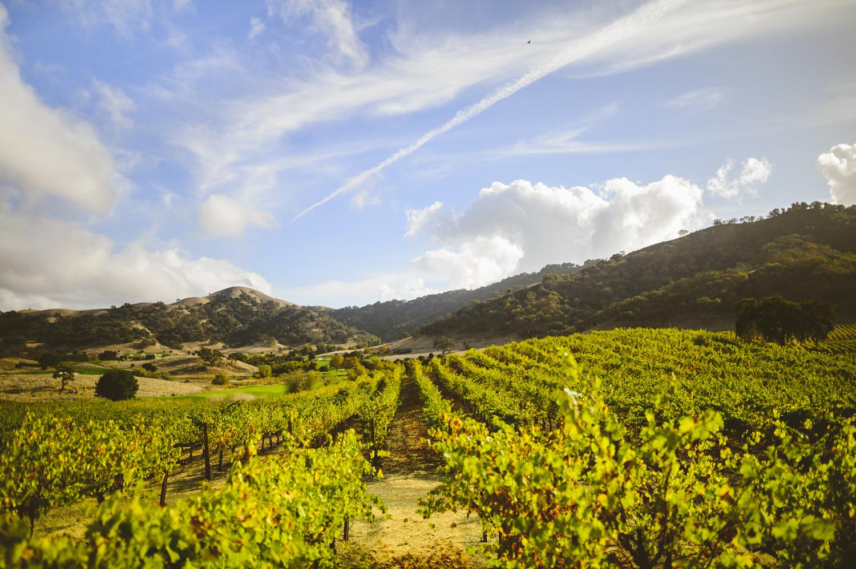 008 - gorgeous california vista photo taken at clos la chance wines in san jose.jpg