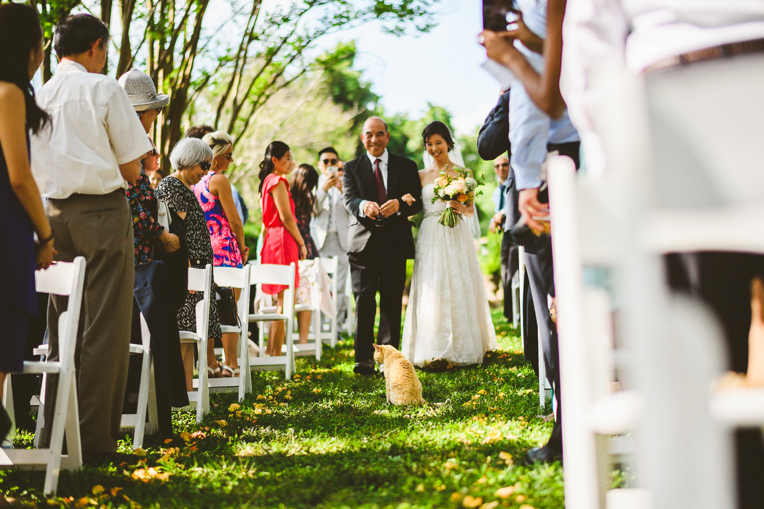 025 - cat in the way of the bride walking down the aisle.jpg