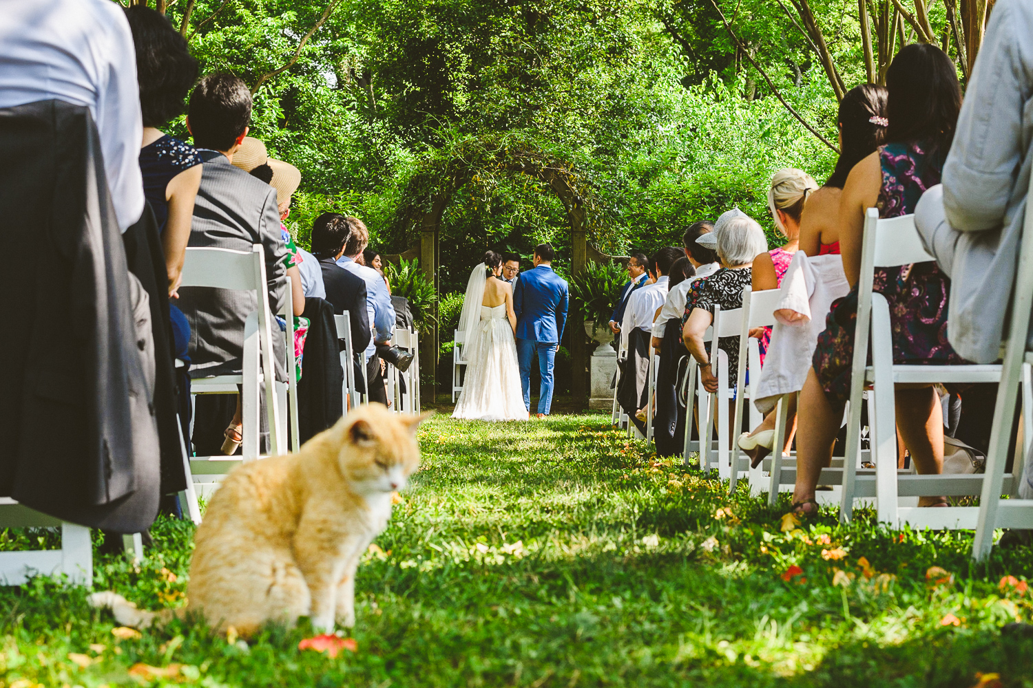 028 - wedding ceremony with farm cat in foreground.jpg