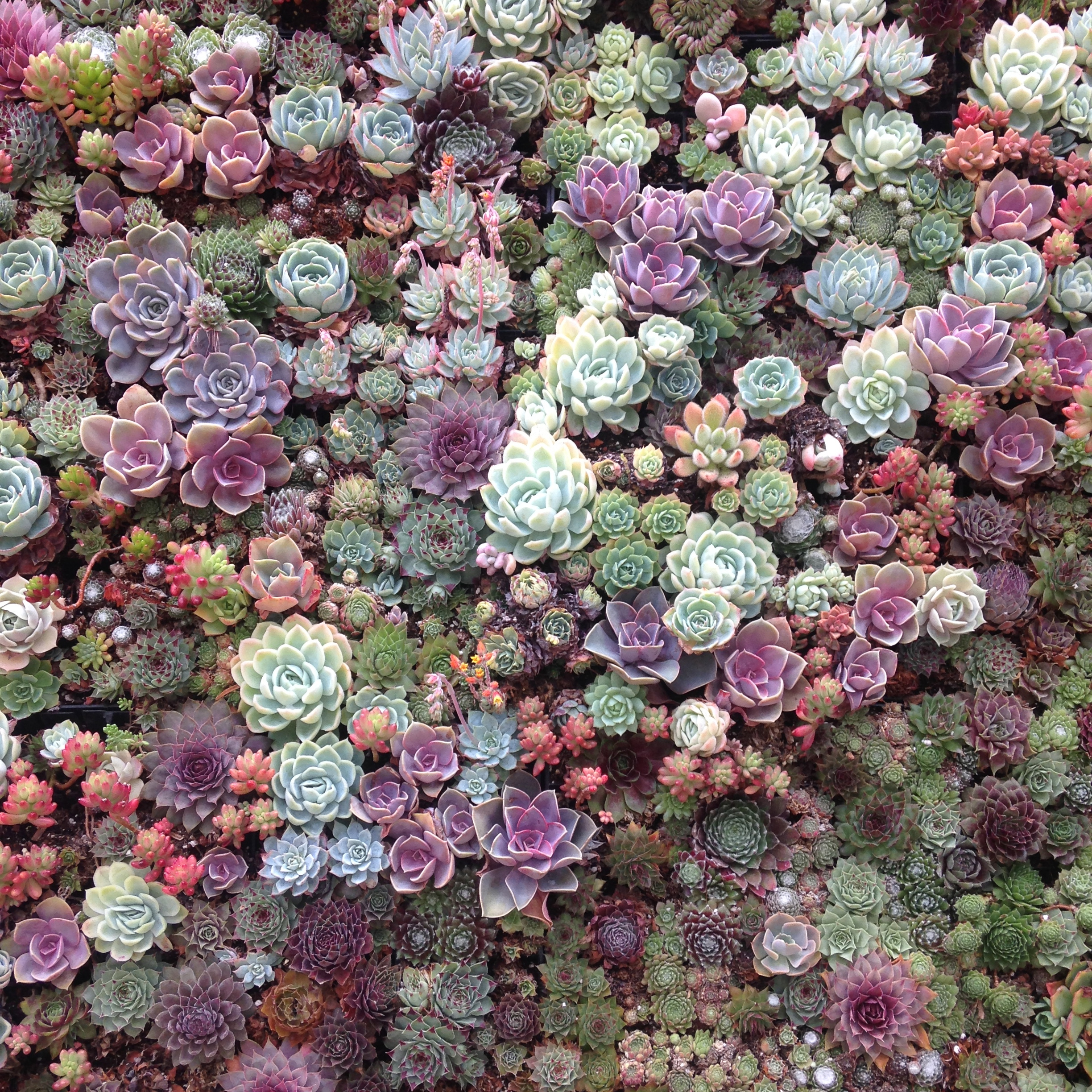 Succulent Galore at Flora Grubbs