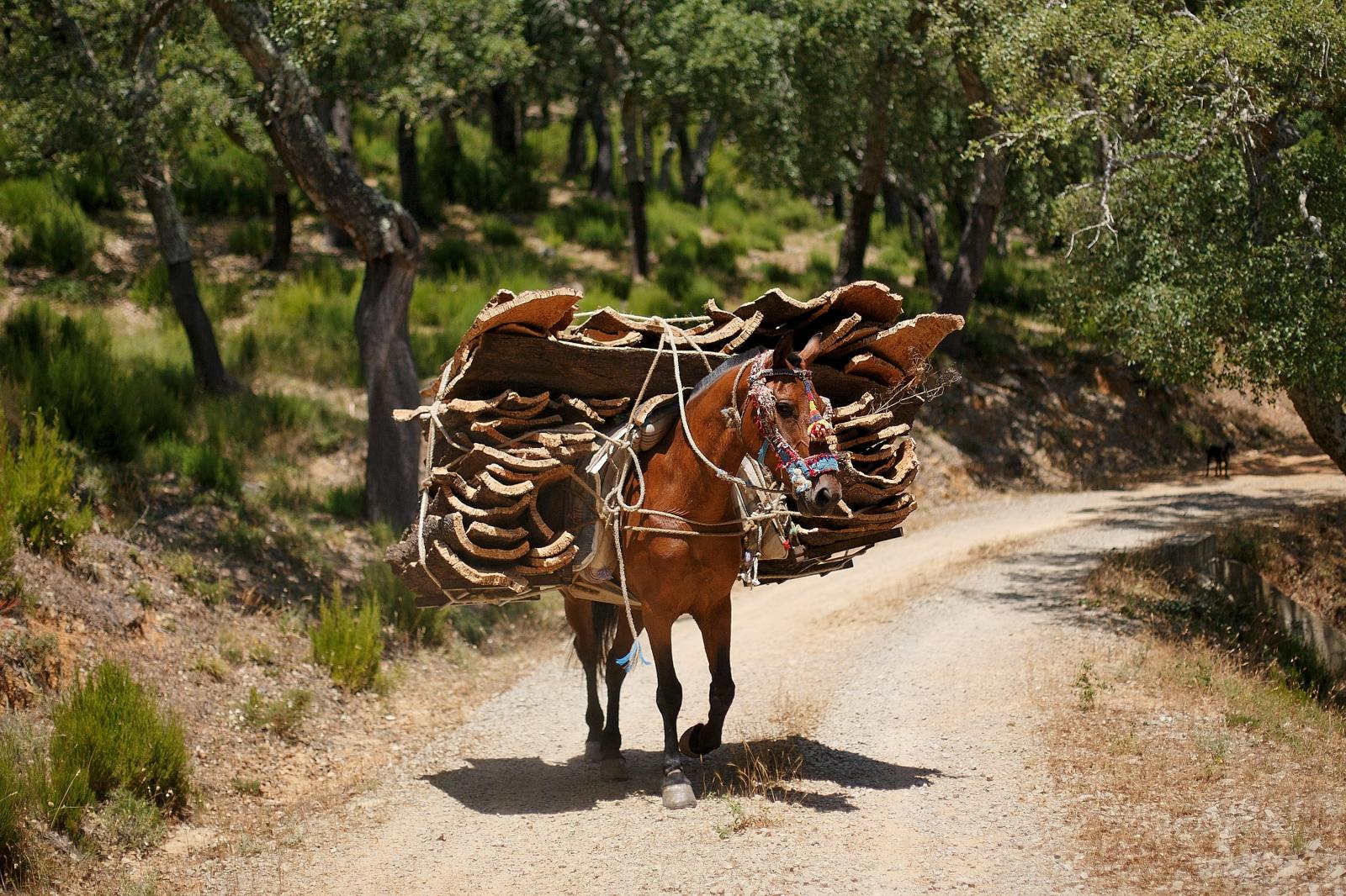 Cork bark being transported on a horse in Portugal.