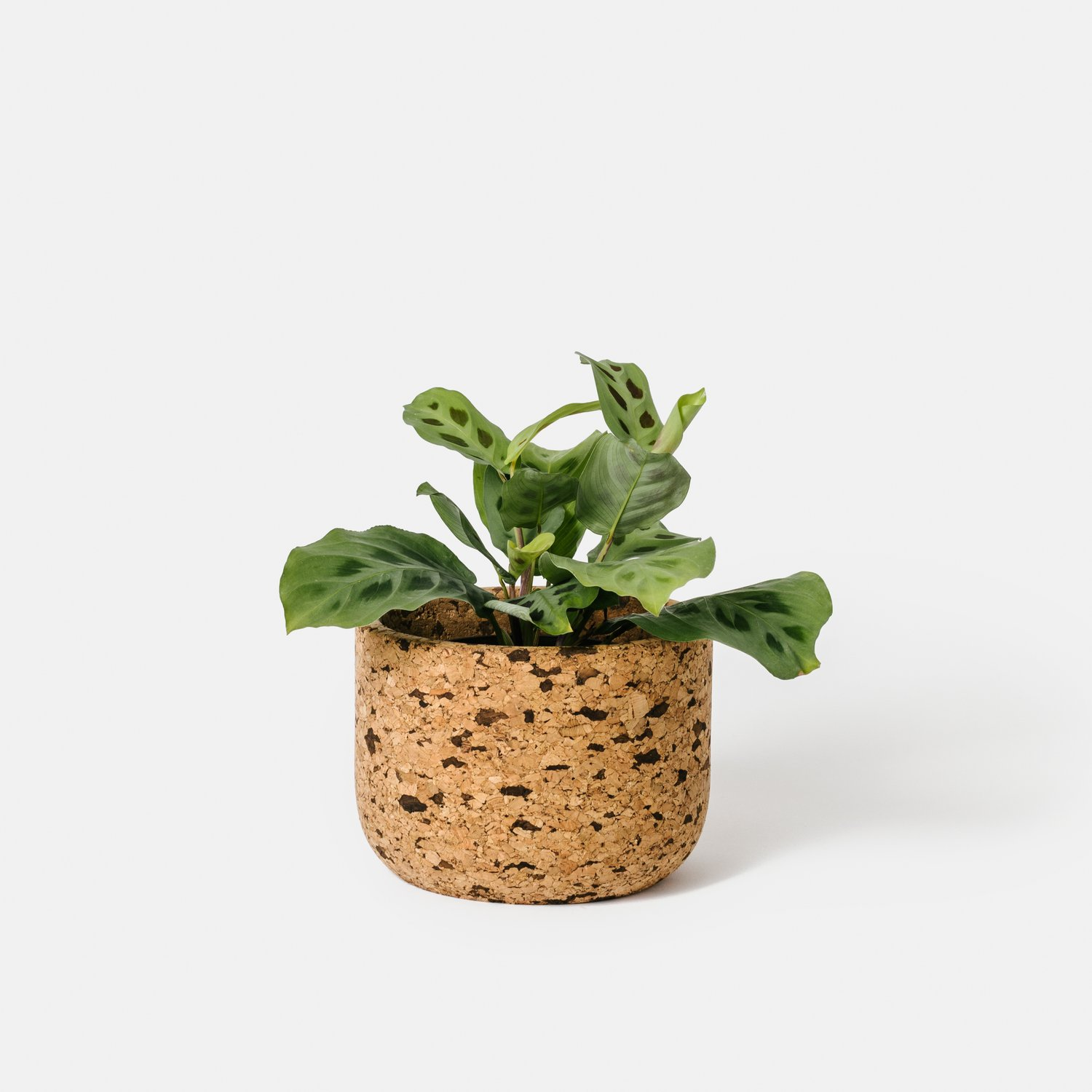 Tall Speckled Cork Bowl