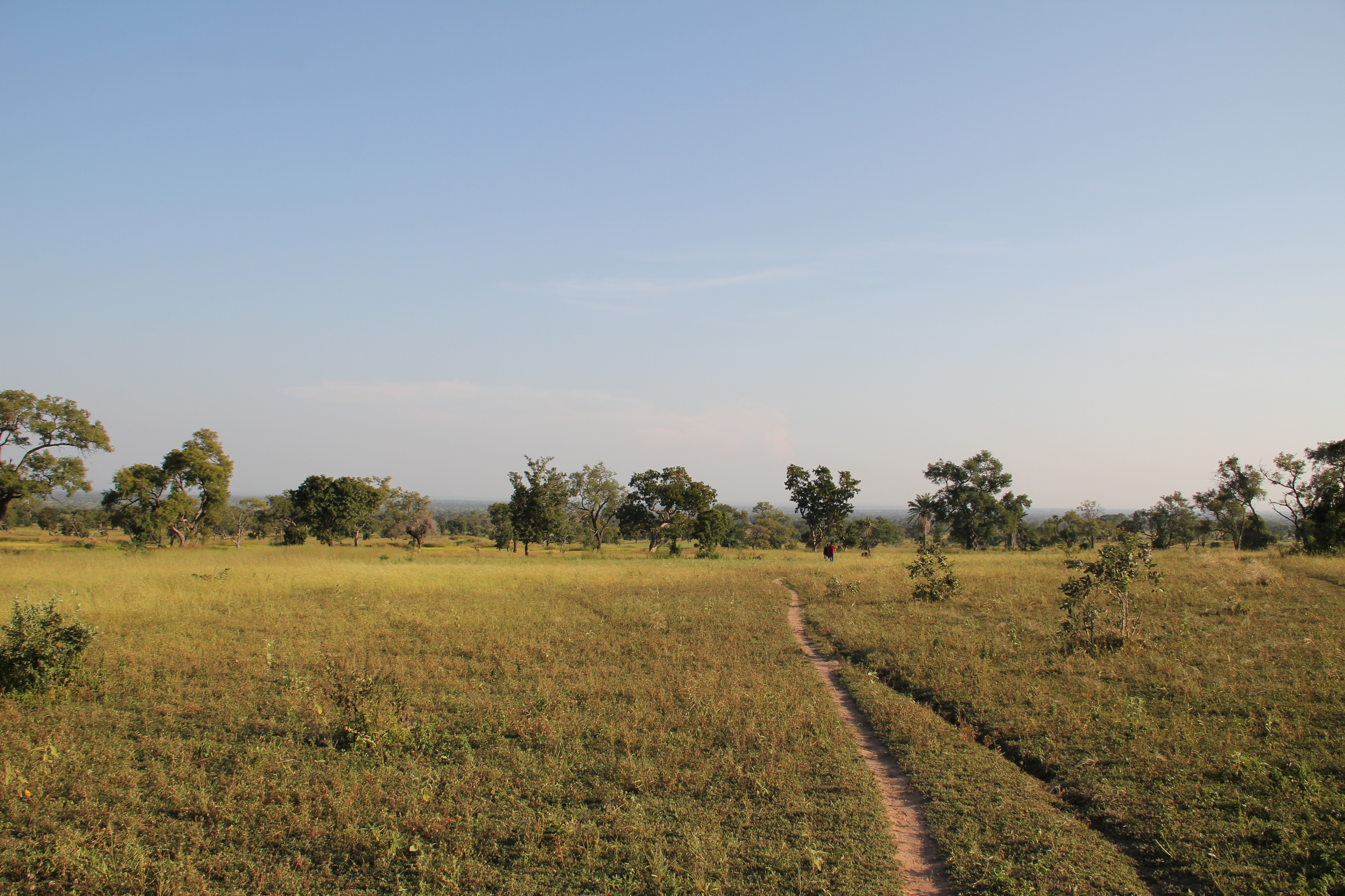 BTS agricultural plot.