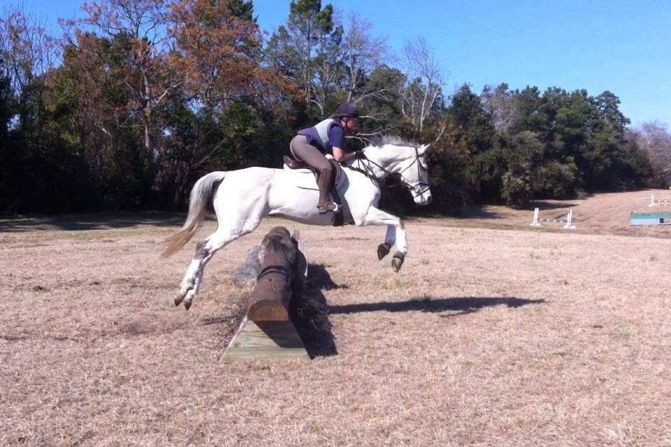 Stud Muffin schooling in South Carolina, winter 2014
