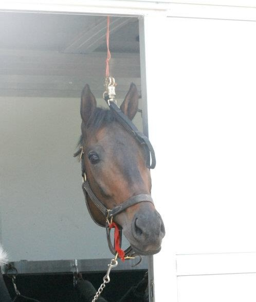Callmetony arrives at Akindale Thoroughbred Rescue