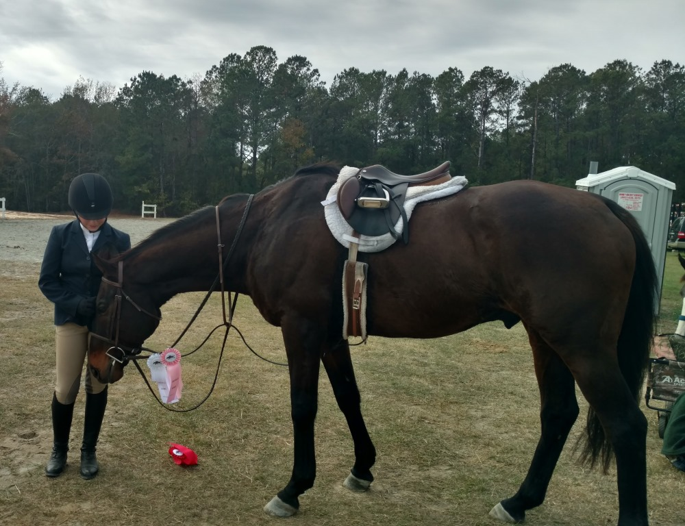 Success Stories — Akindale Thoroughbred Rescue