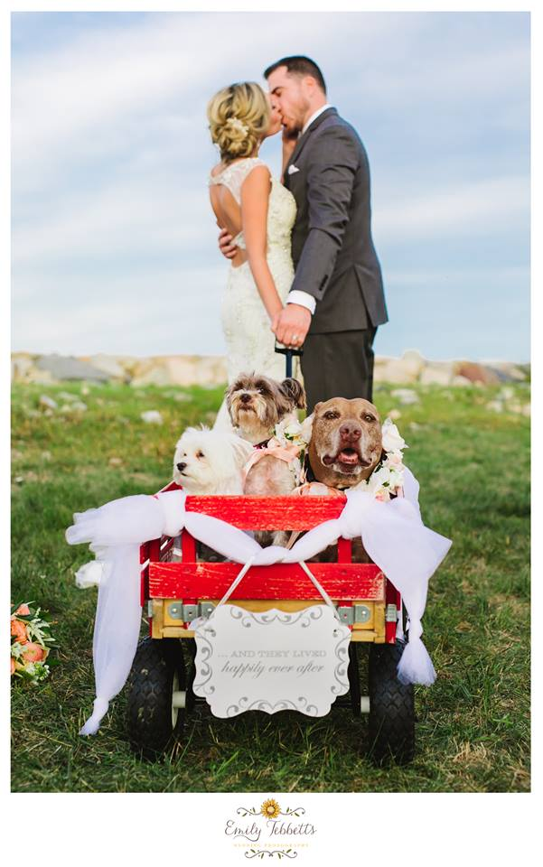 Scituate Intimate Backyard Beach Wedding with Lilly The Hero Pit Bull in Massachusetts - Emily Tebbetts Photography 6.jpg