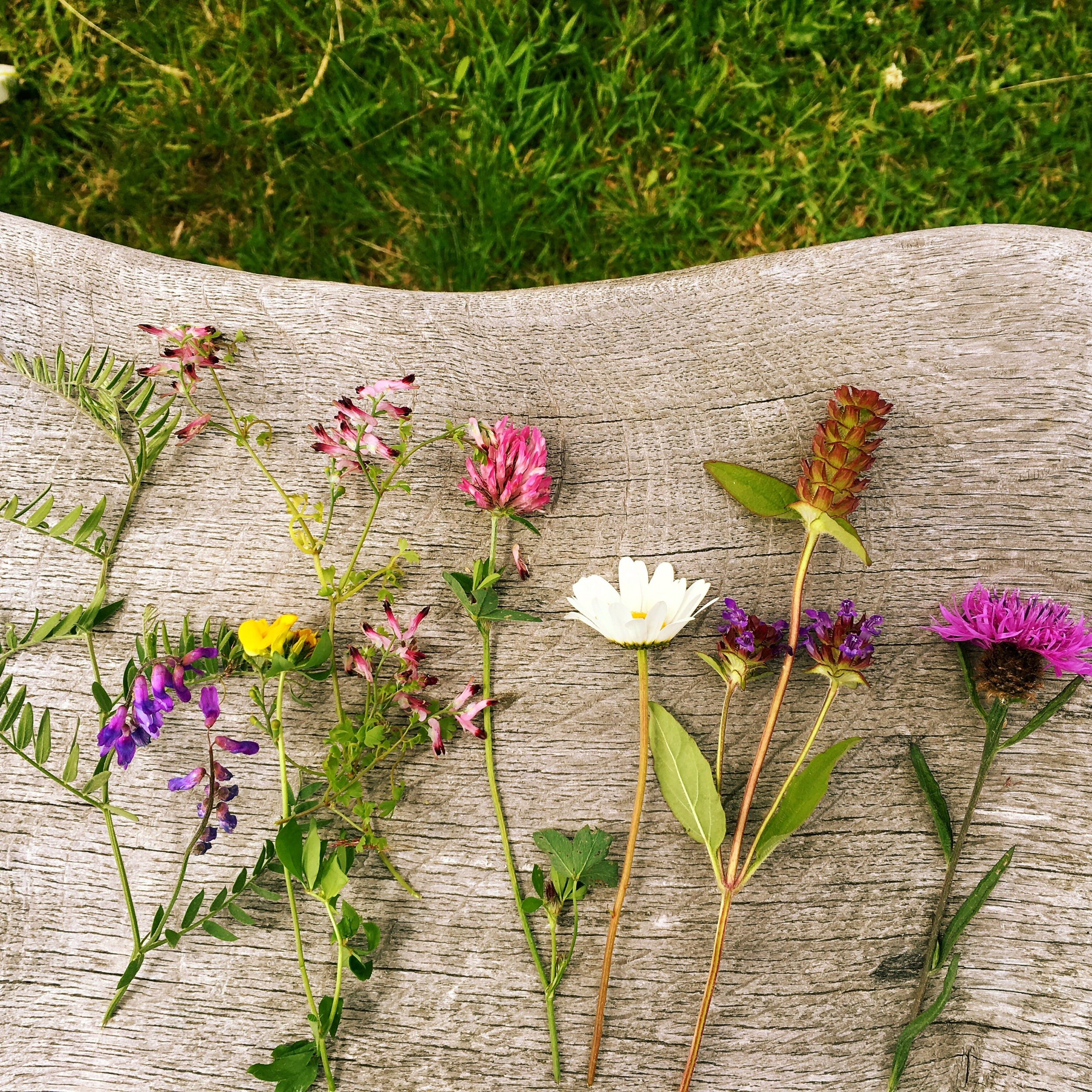 six species of wildflowers lying on the outside table