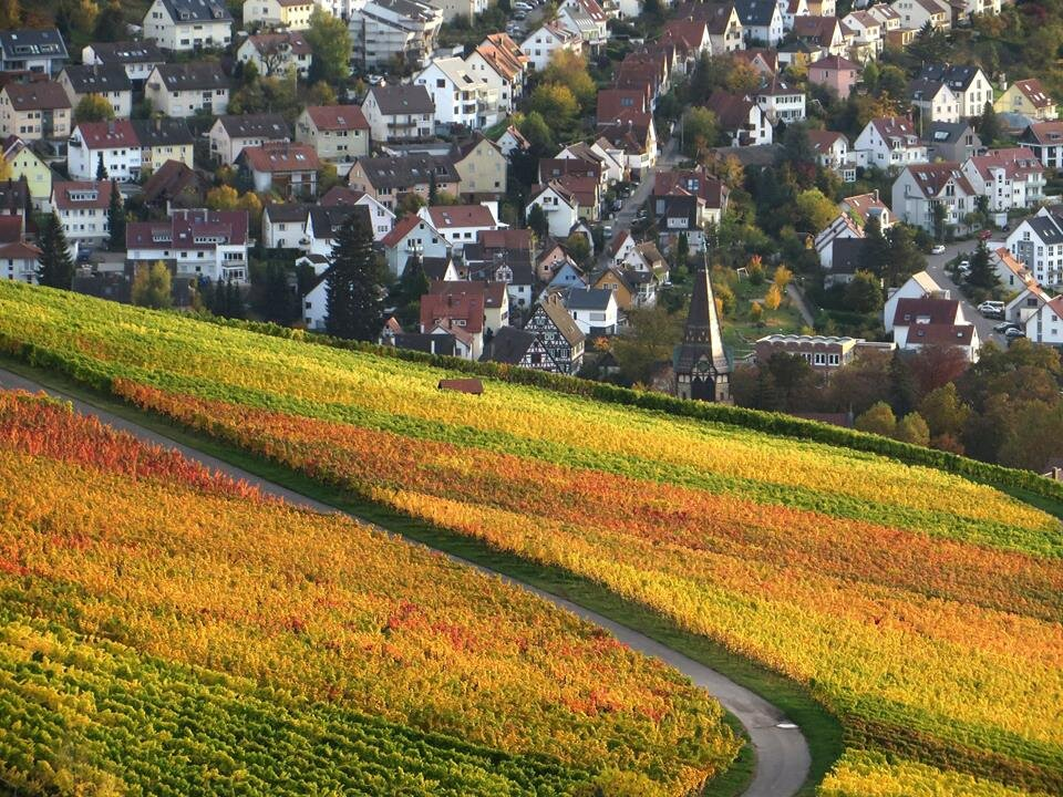 The vineyards above Esslingen are beautiful in the autumn!