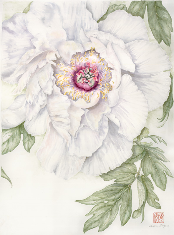 "Japanese Tree Peony   Watercolor on 140-lb. cold-pressed Arches, 16"" x 11.5"""