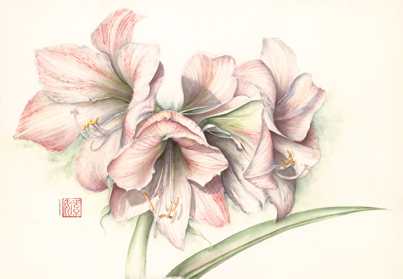 """Amaryllis Apple Blossom   Watercolor on 140 lb. cold-pressed Arches, 10.5"""" x 15"""""""