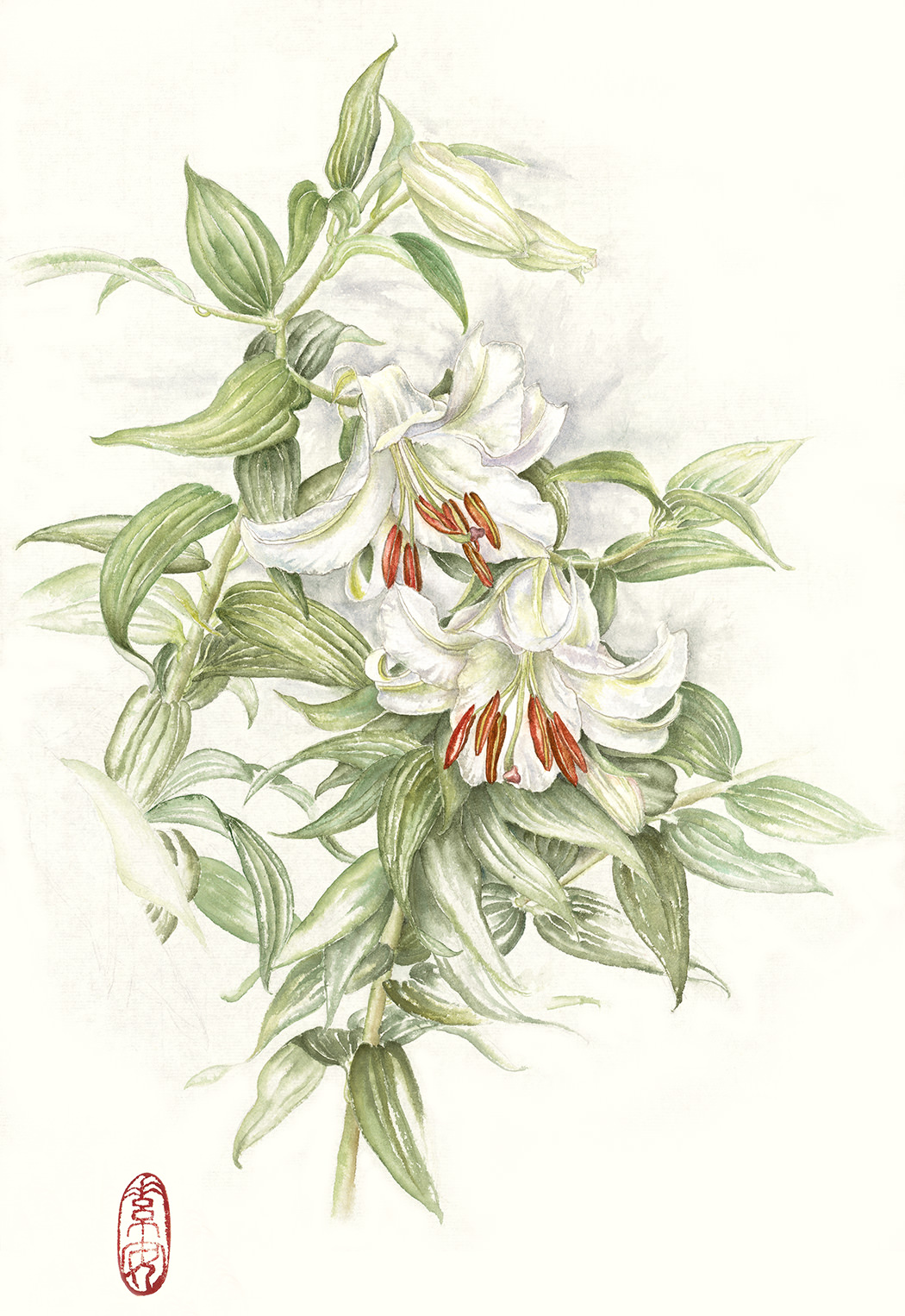 """Casablanca Lilies  Watercolor on 140 lb. hot-pressed Arches, 19.5"""" x 13"""""""