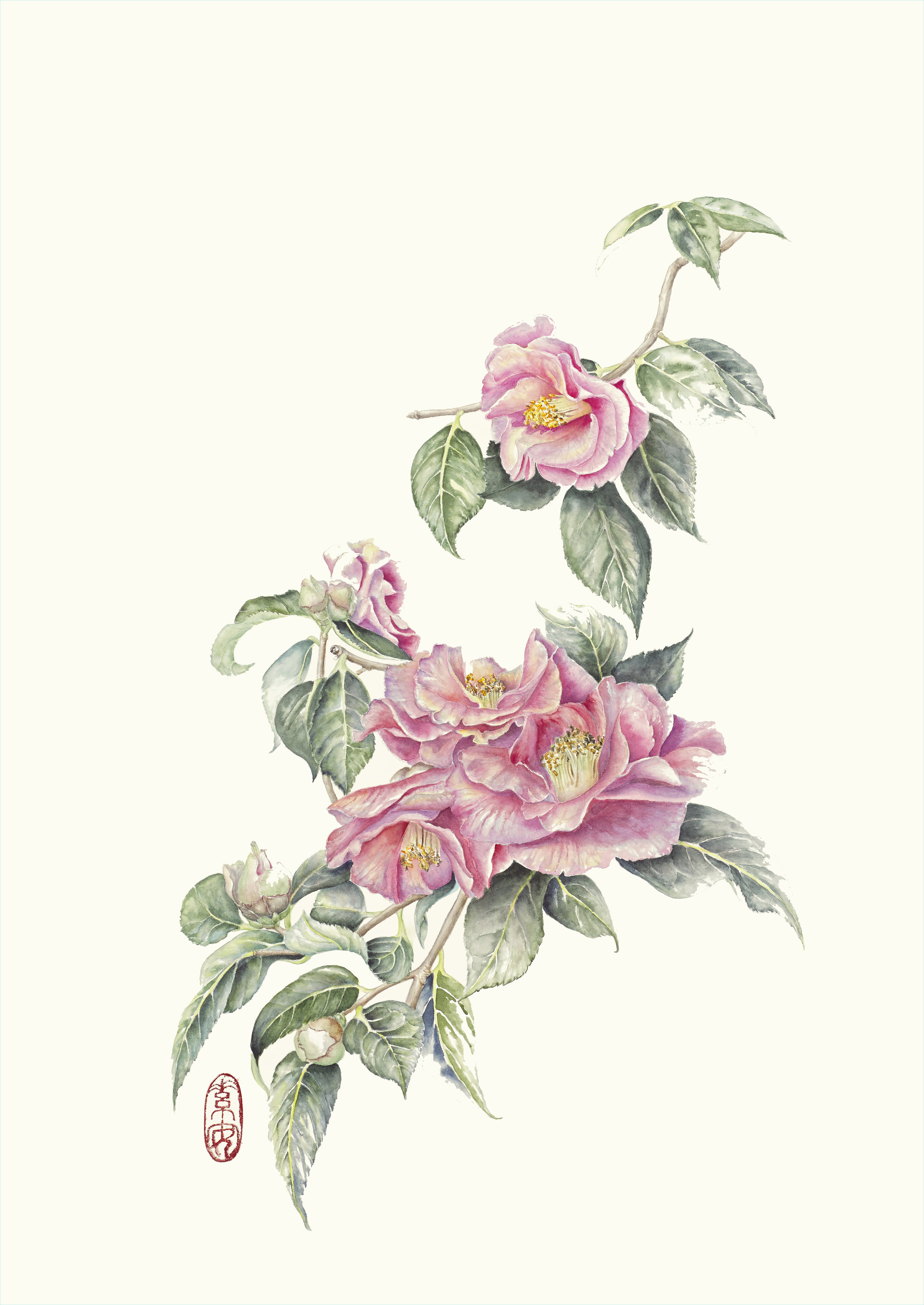 "Camelia 'Lasca Beauty'  Watercolor on 140 lb. hot-pressed Arches,19"" x 13"""