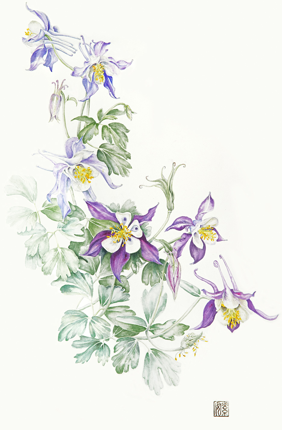 "Columbine   Watercolor on 140-lb. hot-pressed Arches, 21"" x 14"""