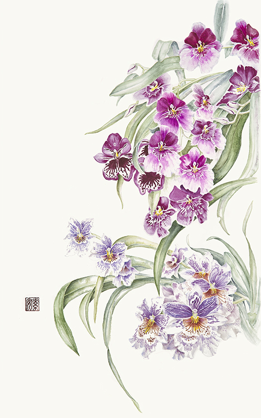 """Miltonia Orchids   Watercolor on 140 lb. hot-pressed Arches, 23.5"""" x 13.5"""""""