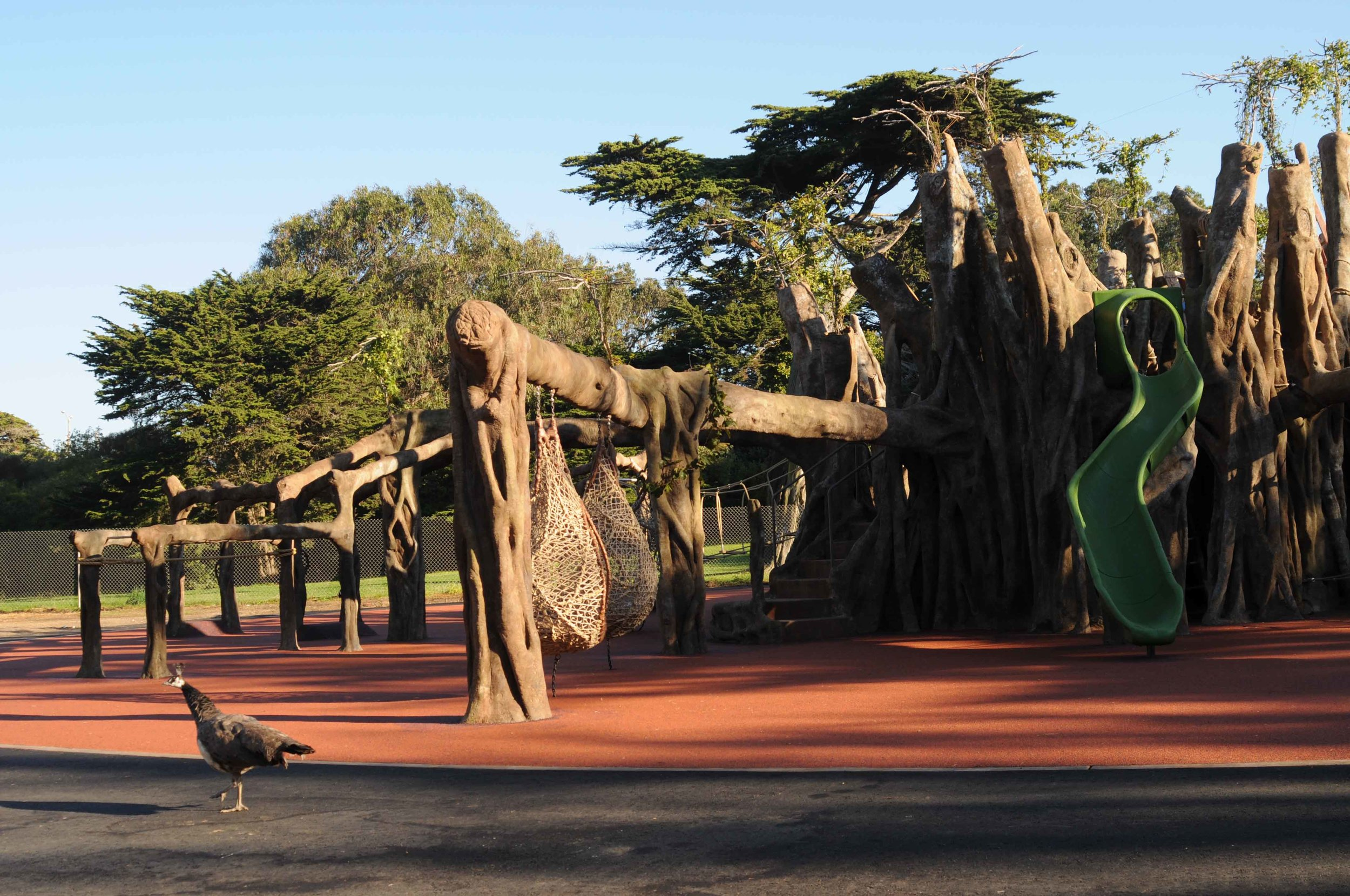 SF Zoo.Playground.Banyon Tree.DSC_2243.lo.jpg