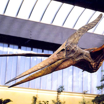 Zoo Emmen : Pteronodon Scientific Sculpture  Emmen, The Netherlands