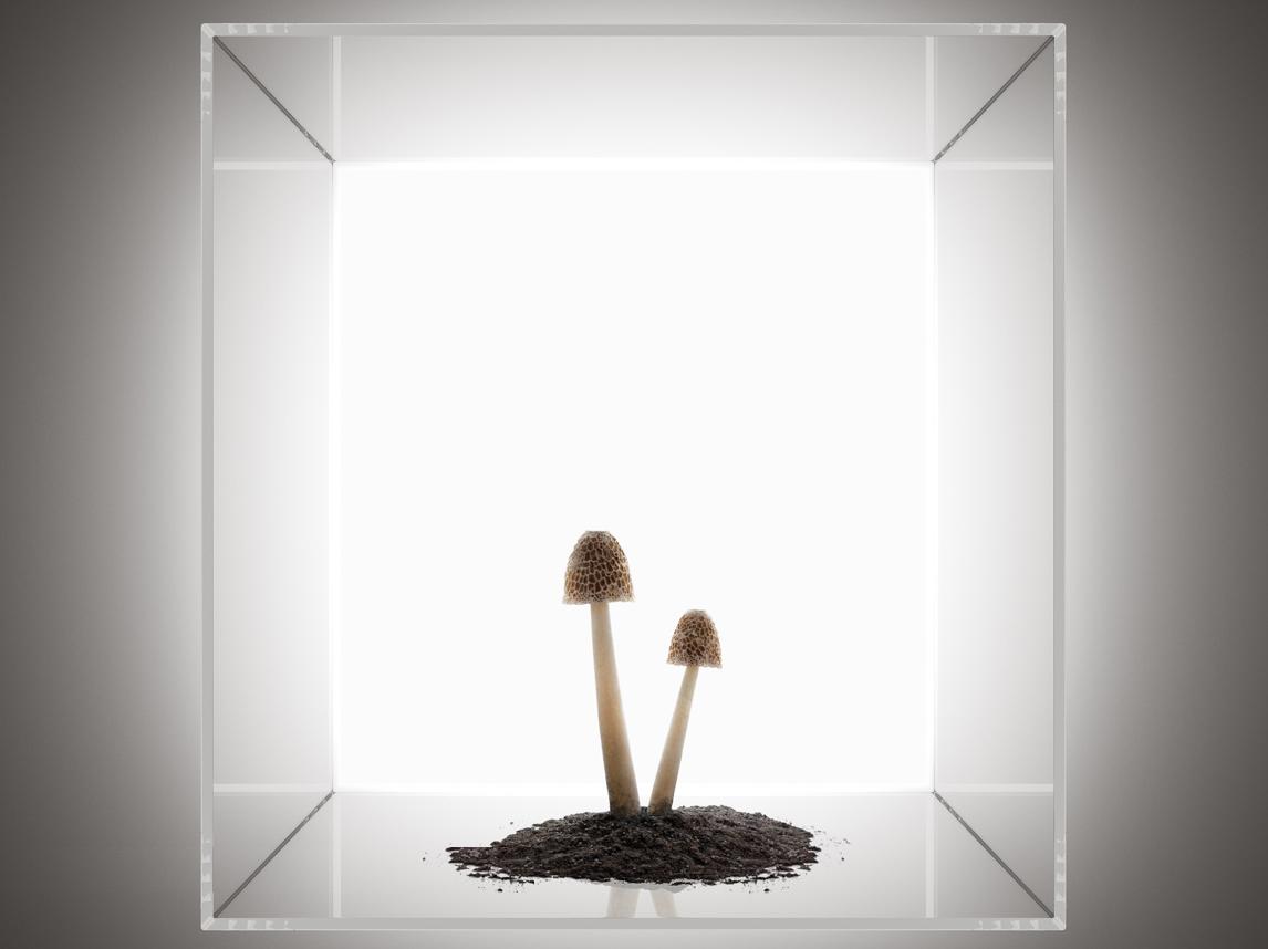 Recom-Arthouse-Sq-5.jpg