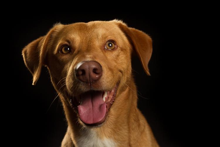 Gonçalo Barriga- Cool Pet Photo-001.jpg