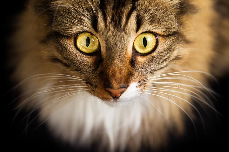 Gonçalo Barriga- Cool Pet Photo-002.jpg
