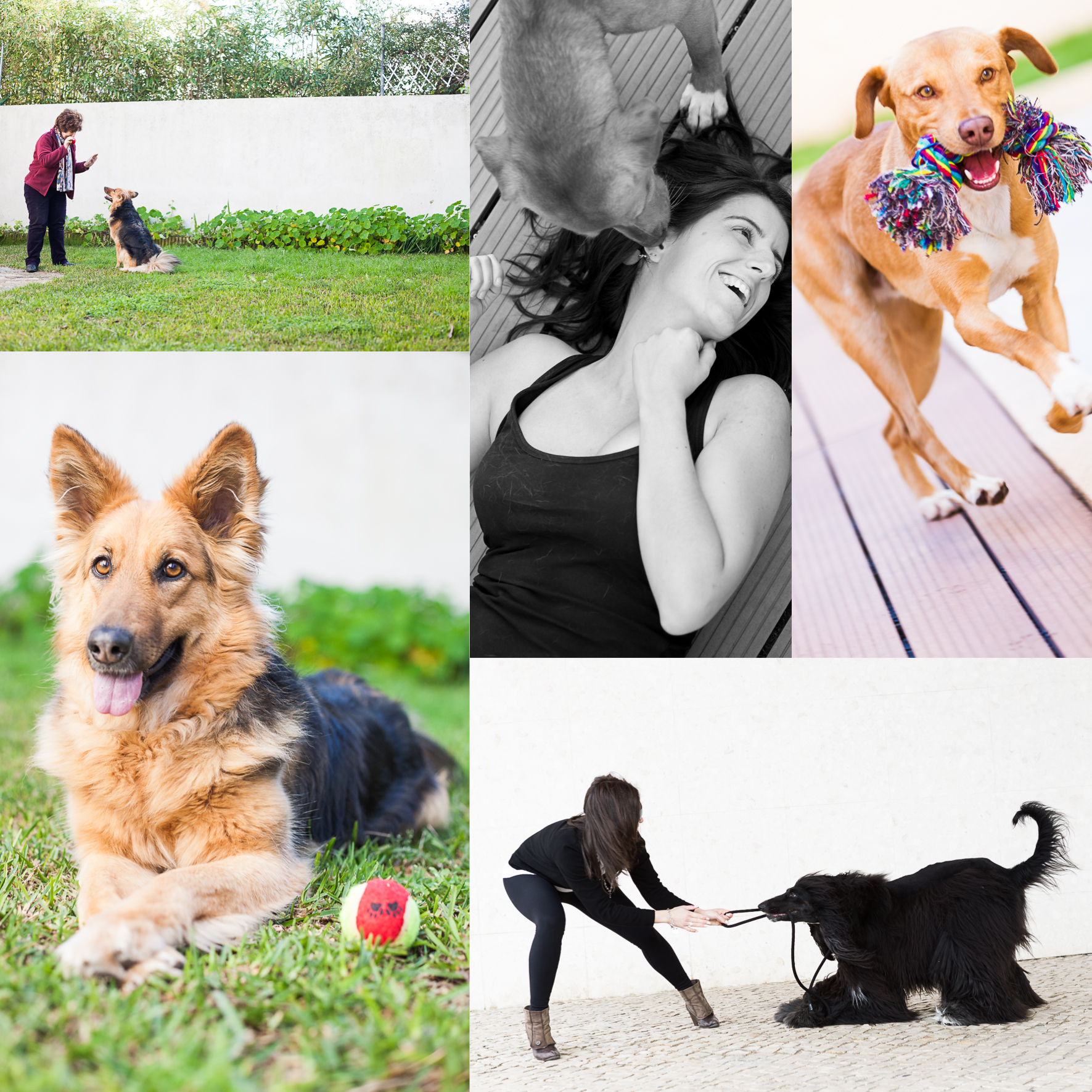 Pet Photography can be a challenge if you're the owner of the pet...