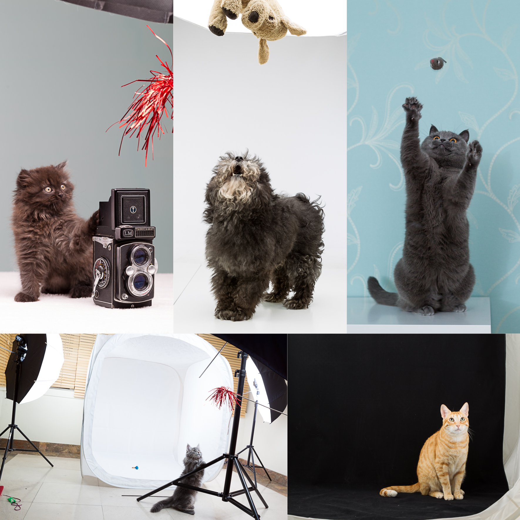 Using studio lighting in Pet Photography