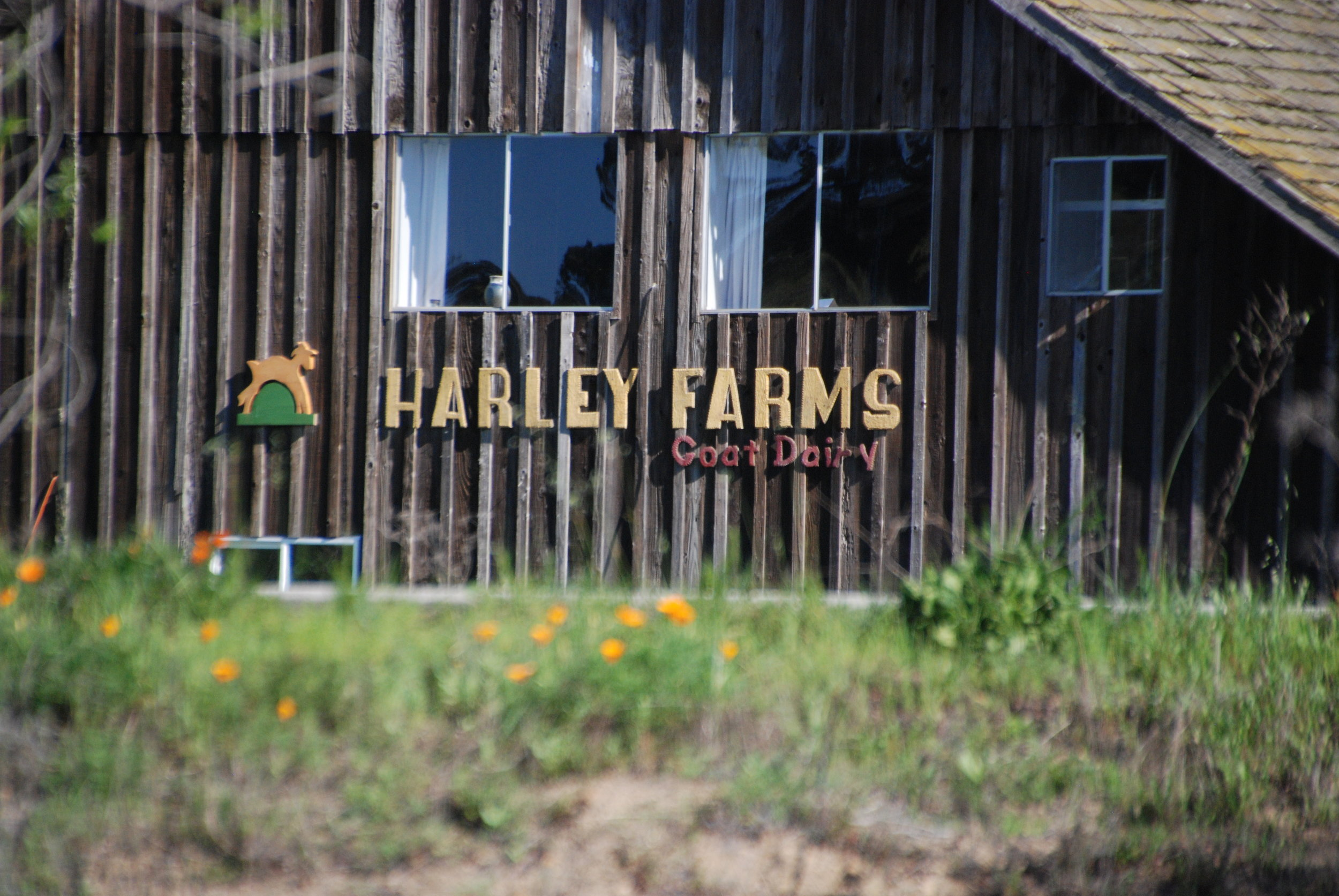 Harley Farms is a Goat Dairy that sells goat cheese as well as soaps and lotions made with goat milk. It is small (80 goats) and has a devoted owner and workers.