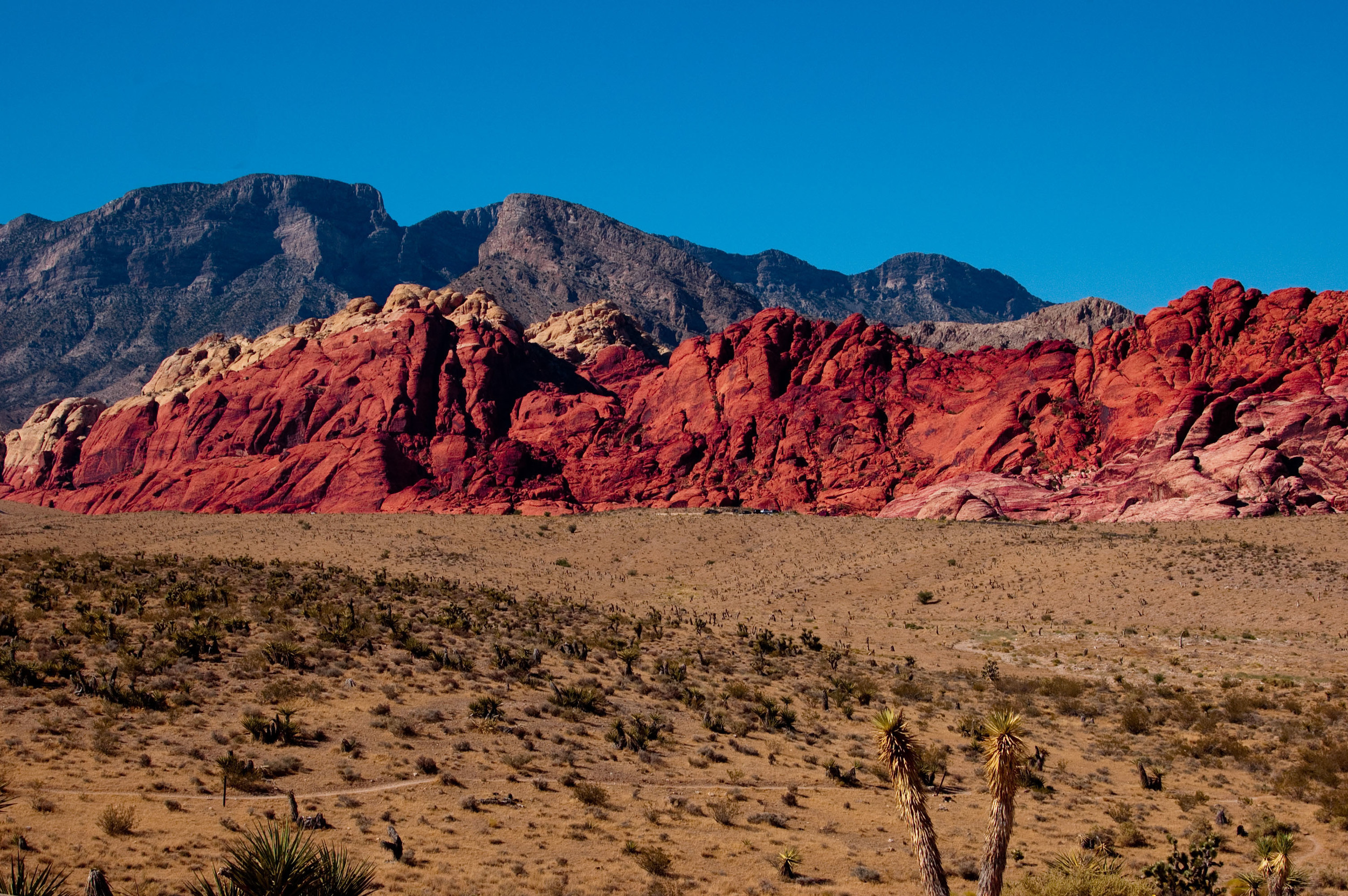 Red Rock Canyon Tours, found on Vegaster.