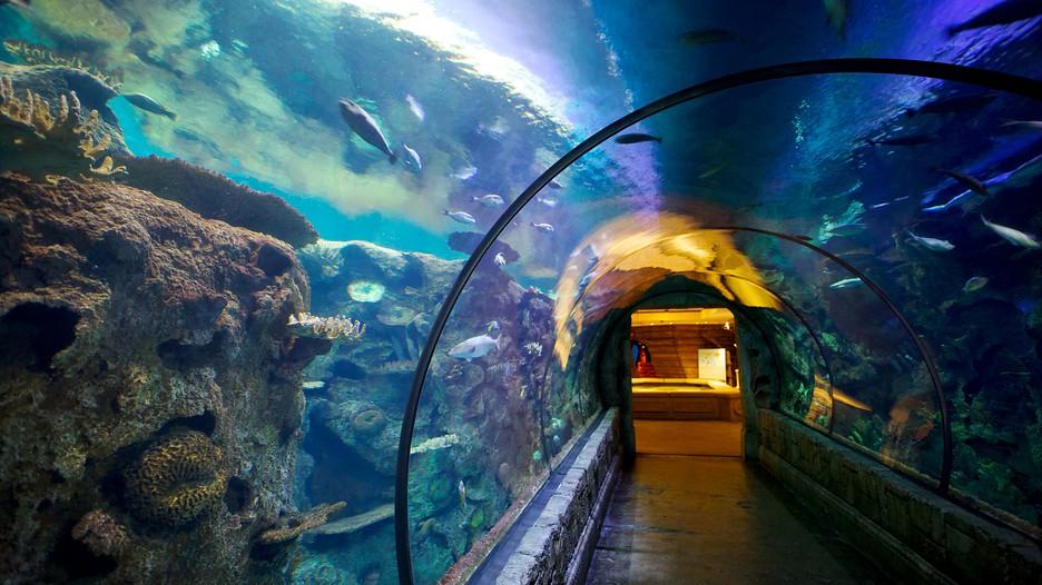 Shark Reef at Mandalay Bay Las Vegas