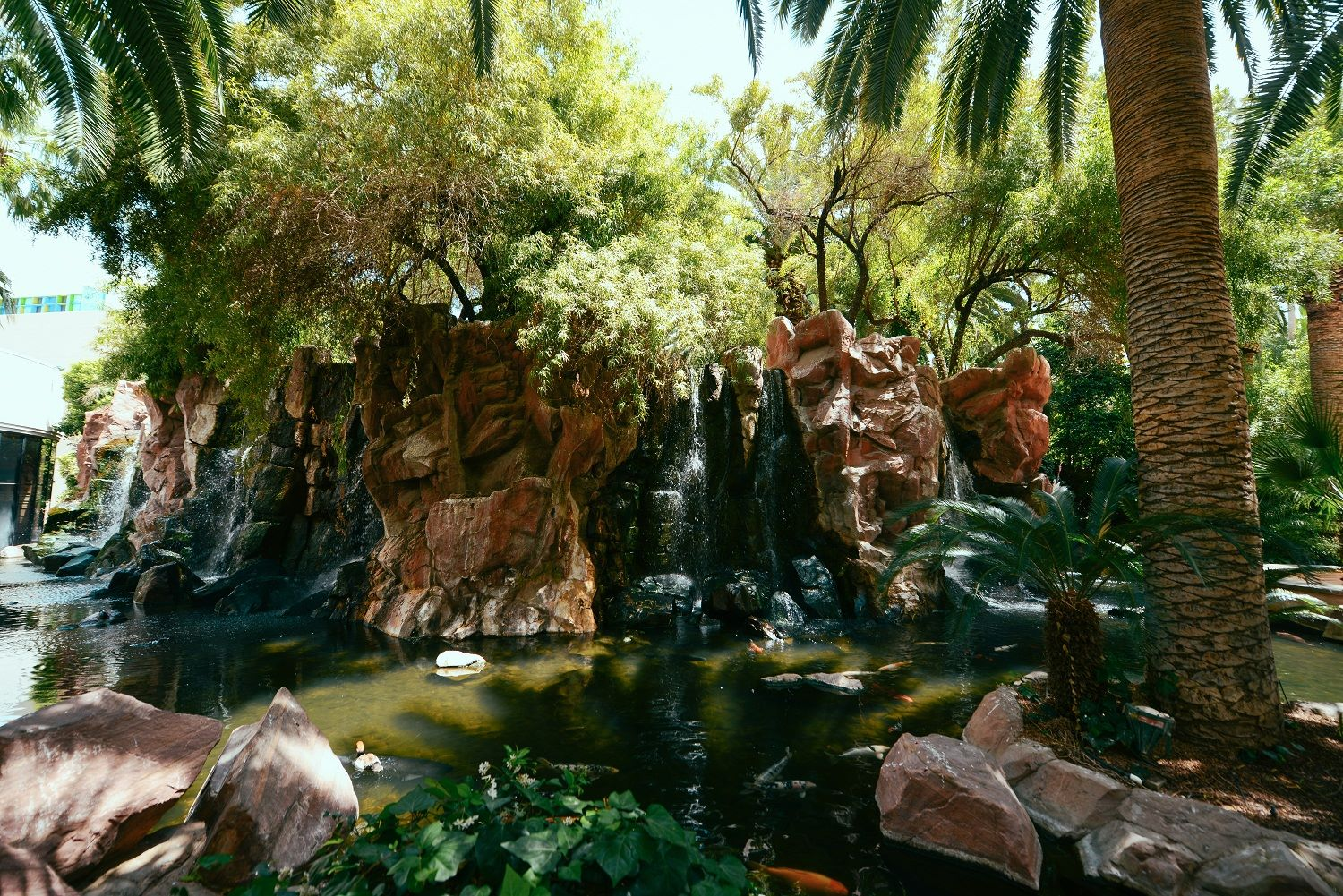 Wildlife Habitat at Flamingo Las Vegas Hotel and Casino
