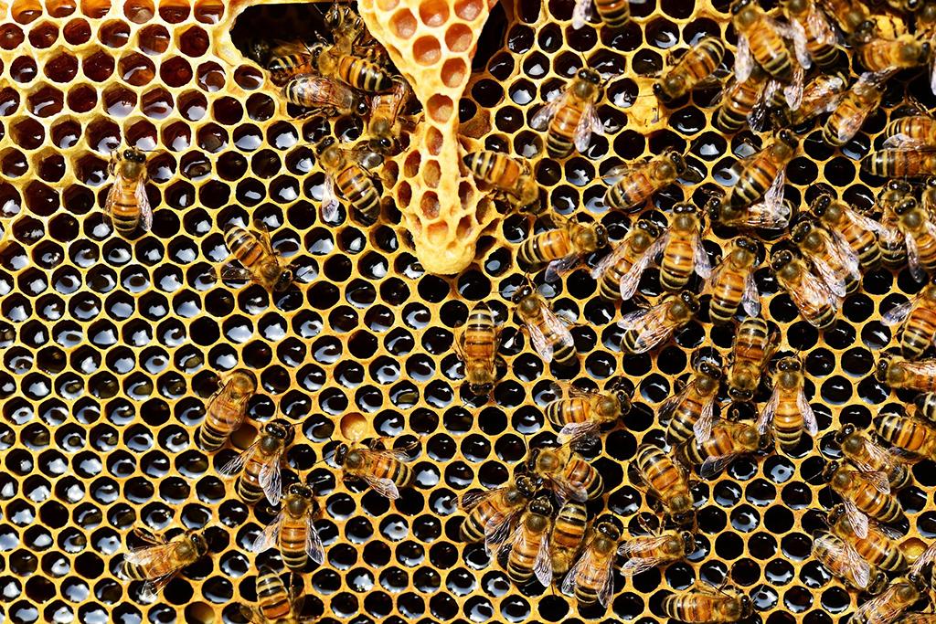 O público poderá escolher o lançamento entre três tipos de mel de abelhas nativas paranaenses, acrescentados a mesma receita de Saison (Foto: Divulgação)